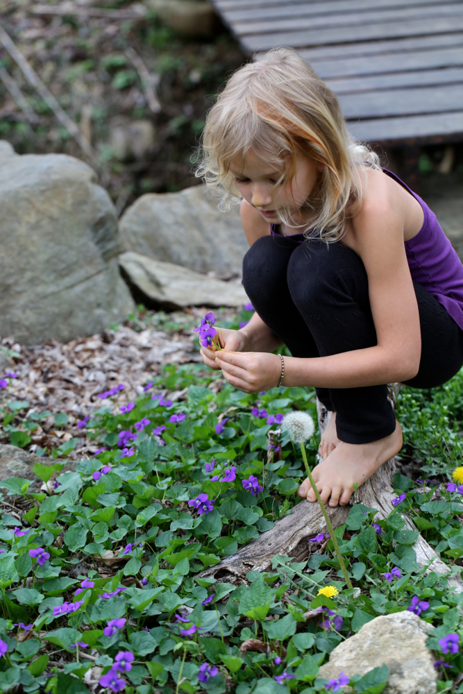 Picking common blue violet